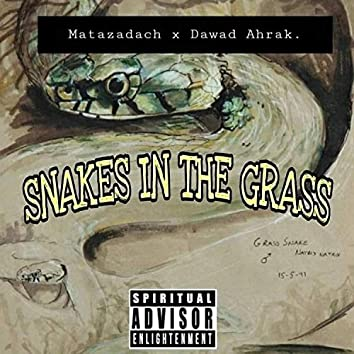 Snakes in the path