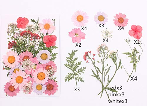 Natural Dried Flowers Combination DIY Pressed Herbarium Flower Decorative for Resin Jewelry Crafts Nail Stickers (A) |