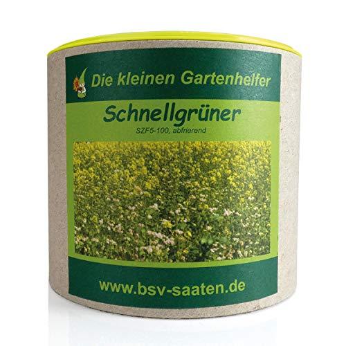 Keimsamen Schnellgrüner 250g I Saatgutmischung mit Ölrettich, Weißen Senf, Saatwicken und Buchweizen I Samen zur Bodenverbesserung I Für 75 m²