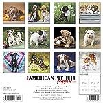 Just American Pit Bull Terrier Puppies 2020 Wall Calendar (Dog Breed Calendar) 4