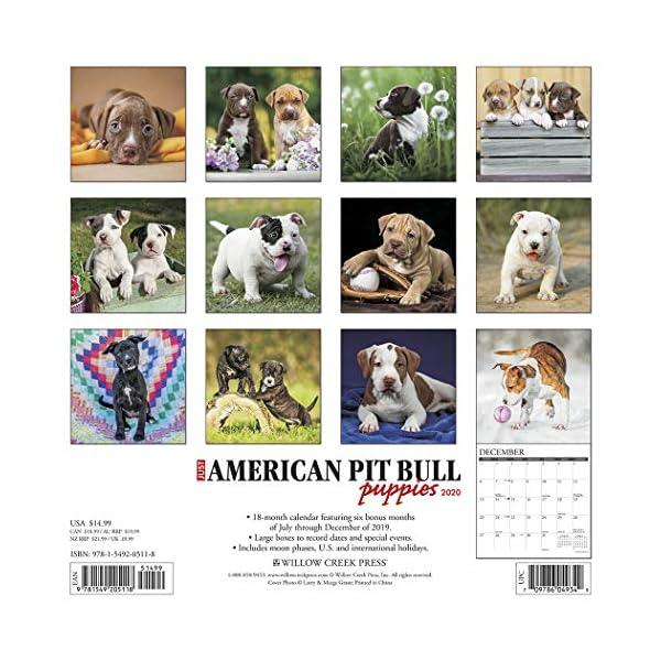 Just American Pit Bull Terrier Puppies 2020 Wall Calendar (Dog Breed Calendar) 2