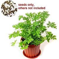 ZHOUBA - Semillas de citronela para jardín, 100 semillas de citronela, repelente de mosquitos, Semillas