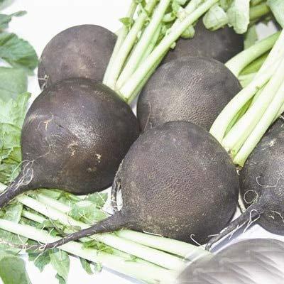 Bloom Green Co. 200 PC/bag Chinesische schwarzer Rettich MIX Farbe Biologisch Früchte Gemüse Bonsai Topfregenbogen-weißer Rettich seedsfor Blumentopf: 12