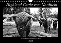 Highland Cattle vom Nordlicht - Faszination Hochland Rind (Wandkalender 2022 DIN A4 quer): Schwarz-Weisser Einblick in das Leben einer Herde (Monatskalender, 14 Seiten )