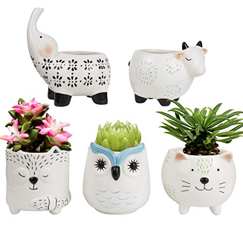 La Jolíe Muse Succulent Planter Pots - Cute Ceramic Animal Set