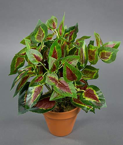Seidenblumen Roß Buntnessel 32cm grün-rot im Topf ZF Kunstpflanzen künstliche Pflanzen Nessel