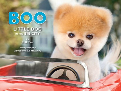 Boo: Little Dog in the Big City (English Edition)