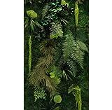 Mur végétal stabilisé intérieur