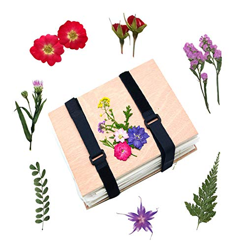 Nature Flower Leaf Press Kit for Kid Adult , Flowers Pressing Kit, Dried Pressed Flowers Petals for Craft, Wooden Art Kit Outdoor Play Learning Toys for 5+ Years Old Or Adult