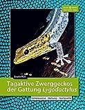 Tagaktive Zwerggeckos der Gattung Lygodactylus: Lebensweise, Haltung,...