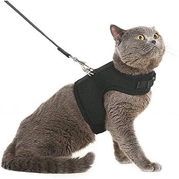 Bingpet Harnais avec laisse pour chat. Maille douce et enveloppante, harnais réglable - idéal pour promener les chatons sans qu'ils ne s'échappent