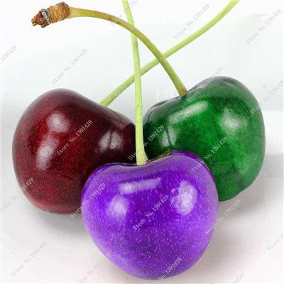 Coloré cerise semences Bonsai extérieur des plantes rares sucré non-OGM Big Fruit Cerise Haute Germination meilleur cadeau pour enfant 30 pièces 4