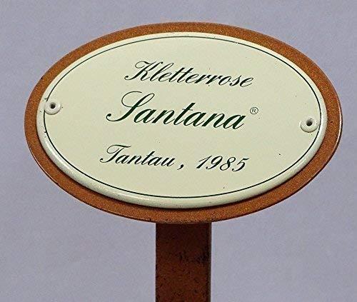 Rosenschild, Rosenstecker Emaille, Kletterrose: Santana, Tantau 1985
