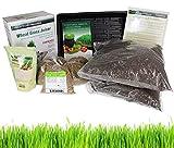 Living Whole Foods Hydroponic Organic Wheatgrass...