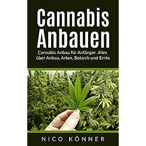 Cannabis Anbau für Anfänger. Alles über Anbau, Arten, Botanik und Ernte