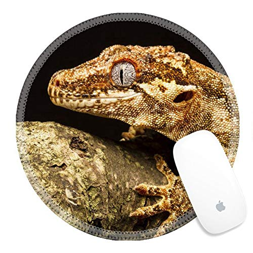 Rundes Mauspad Naturkautschuk Mousepad 31601783 Gargoyle Gecko Rhacodactylus auriculatus im Profil auf einem Ast, der vor einem in Neukaledonien heimischen schwarzen Hintergrund in die Ferne starrt