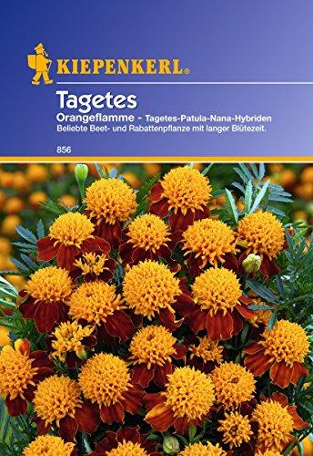 Sperli Blumensamen Tagetes Orangeflamme gefüllt, grün