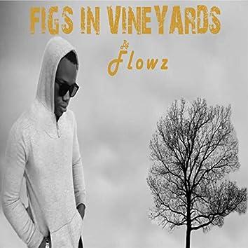 Figs in Vineyards