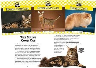 Cats Set 1