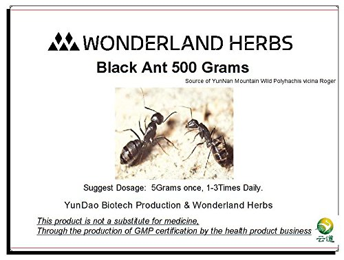 Wonderland Herbs UNADULTERATED 500Grams (1.1 LB) Wild Mountain POLYRACHIS ANT/polyrhachis vicina Extract Powder