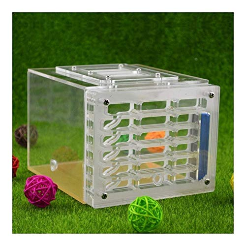 Large Size Acryl Nest Ant Zucht Nest Ant Startseite Ant Farm, Natur Insect Ecology Box, Wissenschaft Spielzeug Kit Geschenk for BO (Size : -)