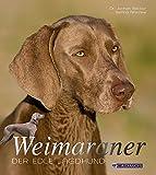 Weimaraner: Der edle Jagdhund (Hunderassen)
