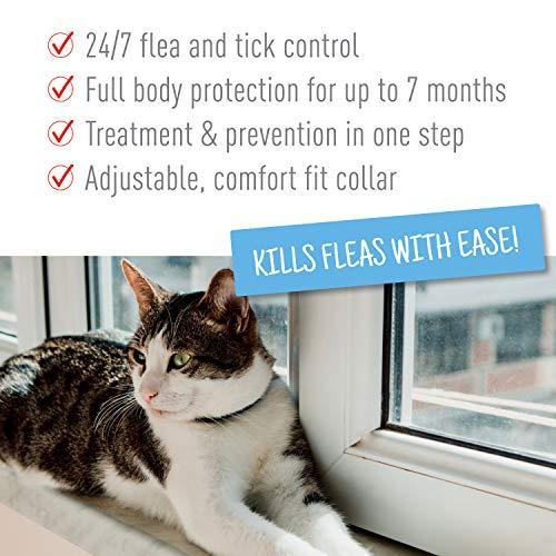 Adams Plus Collar for Cats White Collars 2pk