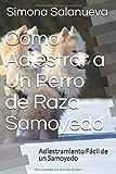 Cómo Adiestrar a Un Perro de Raza Samoyedo: Adiestramiento Fácil de un Samoyedo