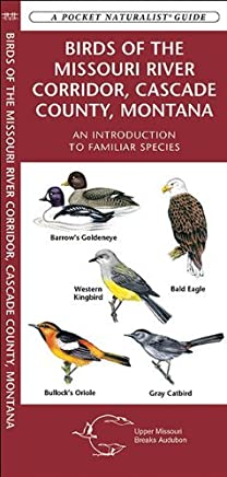 Birds of the Missouri River Corridor, Cascade County, Montana: A Folding Pocket Guide to Familiar Species (Pocket Naturalist Guide Series) by James Kavanagh (2010-04-16)