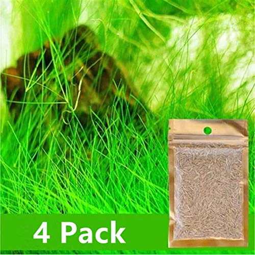 Water Plant Seeds Easy to Grow Aquatic Fescue Carpet Water Grass -0.35oz/Pack Grow Plants for Fish Tank Decoration Landscape Ornament Aquarium Grass Plants Seeds 4 Pack (Big Cow Hair Grass)
