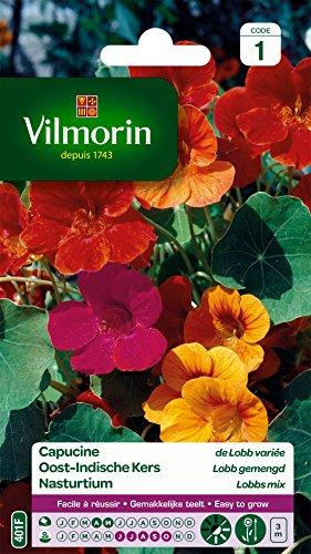 Vilmorin 5185441 Capucine de lobb variée, Multicolore, 90 x 2 x 160 cm