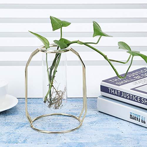 Floreros hidropónicos de la planta del tubo de vidrio de ventilación transparente para Scindapsus para Hydrocotyle Vulgaris(Golden)