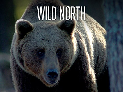 Wild North - The Forest
