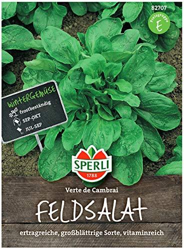 Sperli Gemüsesamen Feldsalat 'Verte de Cambrai', grün