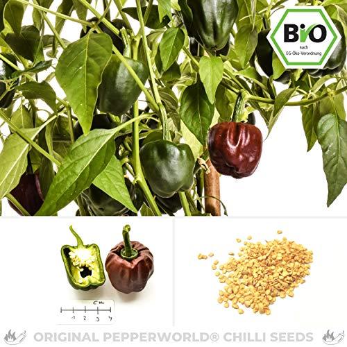 BIO Chilhuacle Negro Chilisamen