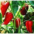 Super Shepherd Sweet Pepper Seeds - Italian sweet pepper is very productive!!