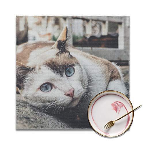 Houity Ricolor kat leunend op grijs beton bestrating wasbaar zacht voor keuken diner tafelmat, gemakkelijk te reinigen handig opvouwbare opslag Placemat 12x12 inch Set van 4