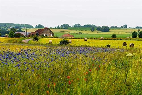 JFZJFZ DIY olieverfschilderij schilderijen op nummer-kits Champagne Ardenne landschap voor volwassenen en tekenaars beginners 40 x 50 cm