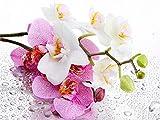 TYH Rompecabezas de 300 Piezas de orquídeas para Adultos Rompecabezas de Madera de 300 Piezas Rompecabezas de 300 Piezas para Adultos 300