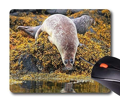 Yanteng Prezzo poco costoso MousePad Rettangolo non slip in gomma Personalità Desings Animale: Skye Scotland Seal