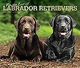 Labrador Retriever – For the love of 2020 - 16-Monatskalender mit freier DogDays-App: Original BrownTrout-Kalender - Deluxe [Mehrsprachig] [Kalender] (Deluxe-Kalender)