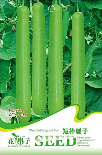 Pinkdose2018 Heißer Verkauf Grüne Lange Club Flasche Kürbis Obst Samen, Original Pack, 10 Samen/Pack, Non-gmo Essbaren Kürbisse Gemüse # C108