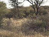 Kalahari Slug Fest