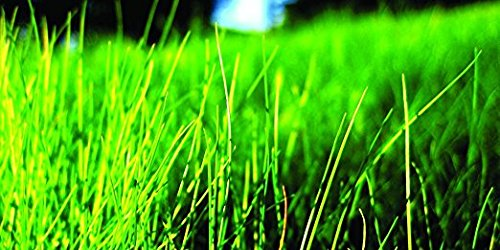 Nature's Seed TURF-FF-500-F Fine Fescue Grass Seeds Blend,...