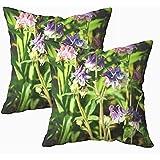 Tedtte Cusion Pillow Cover 2 Pack El Nombre derivado Dela Palabra Latina águila Debido a la Forma de los pétalos de Flores Que Son 45 x 45 cm