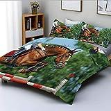 Juego de funda nórdica, mujer joven saltando con caballo de bahía, competencia, obstáculo, entrenamiento, yegua, juego de cama decorativo de 3 piezas con 2 fundas de almohada, multicolor, el mejor reg