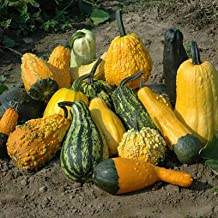 Gourd Lunch Lady Seeds - Vegetable Seeds Package - 1 OZ Package