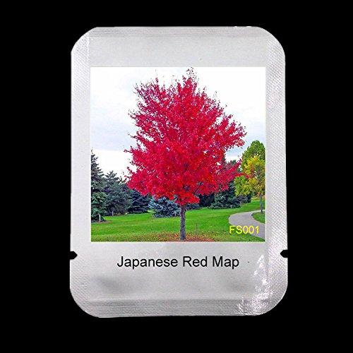 50 GRAINES / PACK JAPANESE ARBRE ROUGE MAPLE AVEC FORFAIT PROFESSIONNEL * TRES BELLES * JAPON MAPLE NOUVELLES GRAINES * CADEAU MYSTÉRIEUSE, # FS001