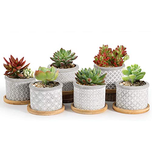 T4U 2.5 Inch Cement Succulent Pot with Bamboo Tray Set of 6, Small Grey Concrete Planter Garden Cactus Plant Herb Container for Home and Office Decoration Birthday Wedding