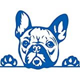 NBFU DECALS Funny French Bulldog Peeking Paws Cute Tongue (Azure Blue) (Set of 2) Premium Waterproof Vinyl Decal Stickers for Laptop Phone Accessory Helmet Car Window Bumper Mug Tuber Cup Door Wall